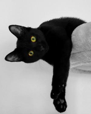 Welche Auswirkungen hat die Verdaulichkeit eines Futters auf Hund und Katze?