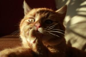 Besonderheiten in der Katzenernährung