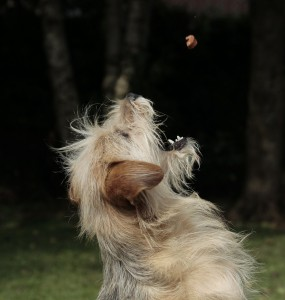 Hundetraining online - Sinn oder Unsinn?