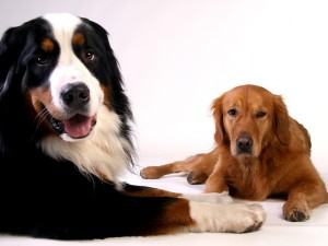 Tipps zur richtigen Futterumstellung beim Hund