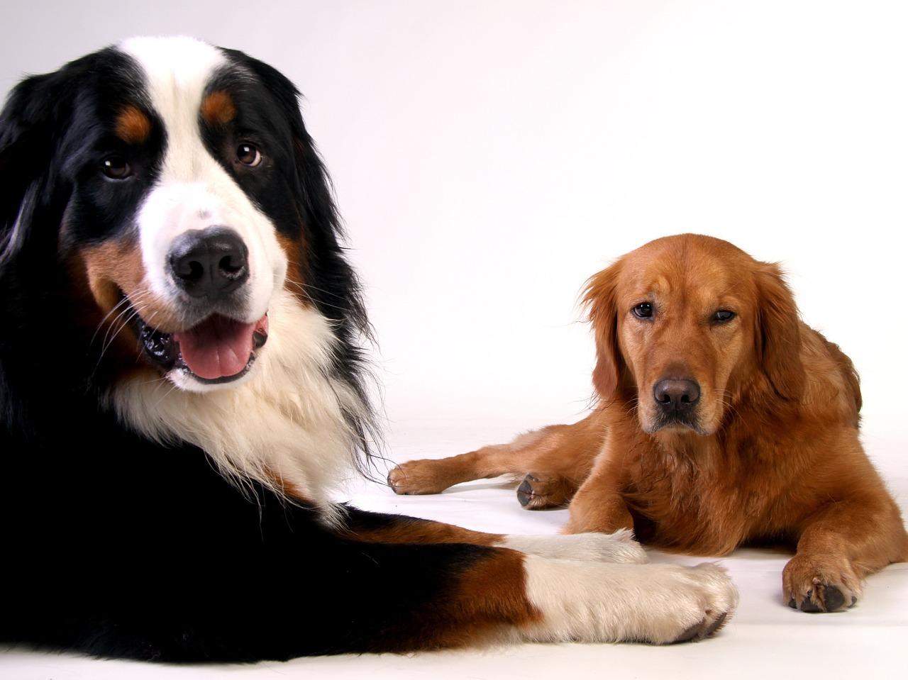 Tipps zur richtigen futterumstellung beim hund 4pfoten for Goldorfen futter