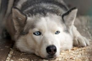 Wie kann ich an der Zutatenliste des Futters für Hund und Katz' die Qualität erkennen?