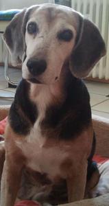 Erfahrungsbericht: Beginnende Niereninsuffizienz bei unserem Hund Teil 1