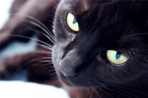 Der Darm - DAS zentrale Organ für die Gesundheit von Hund und Katz'