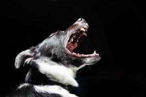 Zusammensetzung der Nahrung des Wolfes