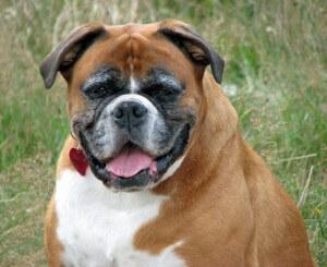 Übergewicht beim Hund - die besten Tipps zum Abnehmen