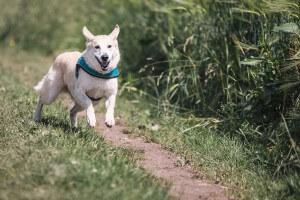6 Kriterien, an denen man ein artgerechtes Nassfutter für Hunde erkennt