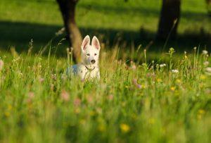 Pflanzliche Frühjahrskur für meinen Hund – so wird sie gemacht