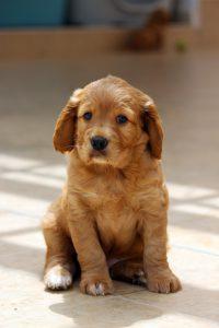 Ernährung eines Hundewelpen - von der Geburt bis zum ausgewachsenen Hund