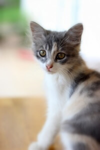 Chemiefreie Katzennahrung